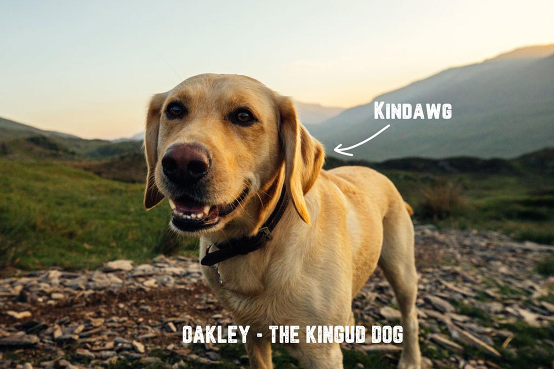 KIingud Dog